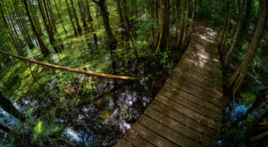 15 Marvelous Trails You Have To Hike In Louisiana Before You Die