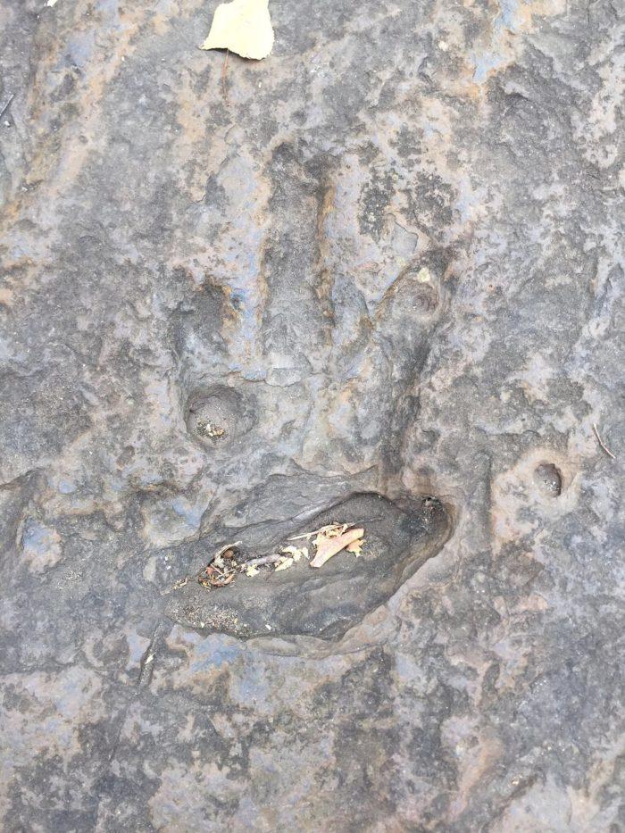 dinosaur-footprints-1