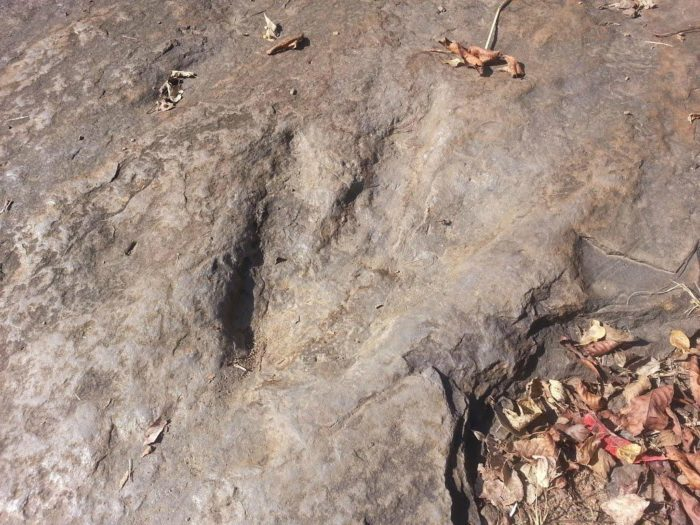 dinosaur-footprints