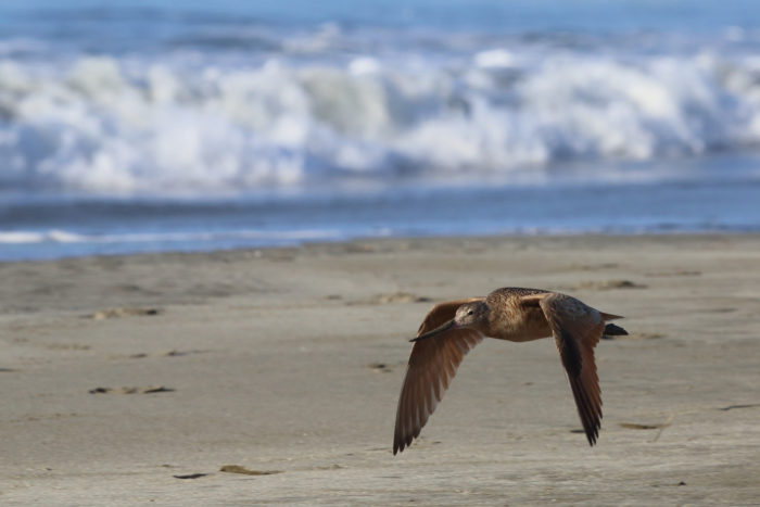 2. Walk the beach in Bodega Bay.