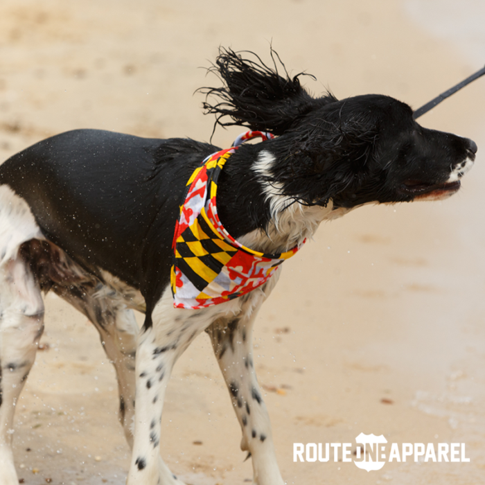 2. Let your pups display their state pride.