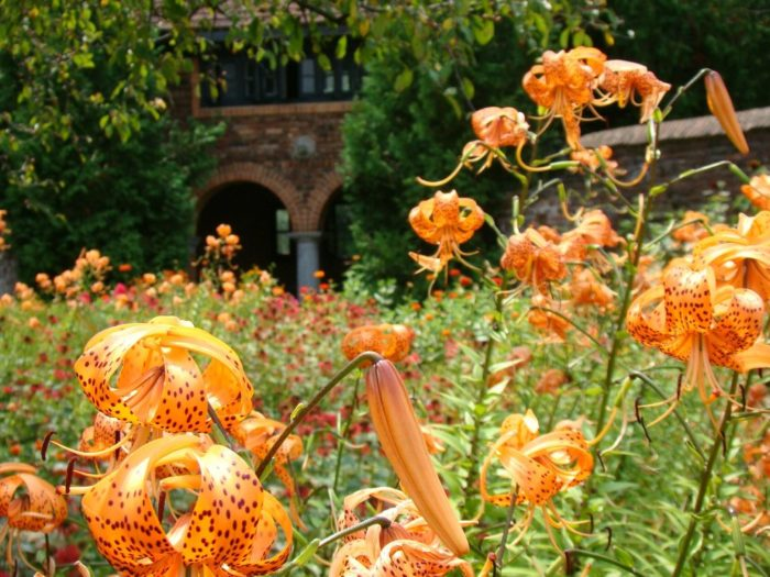 Historic tours are offered daily at 11:30AM and 2:30PM, the perfect way to explore the garden.