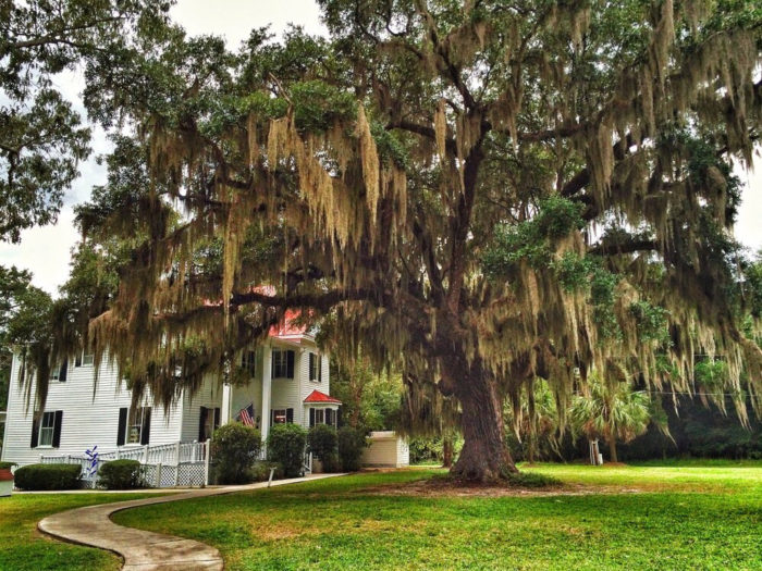 Last, but certainly not least, you should pay a visit to Frampton Plantation (a.k.a. the Visitors Center).