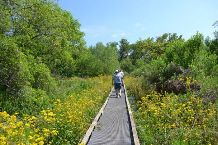 2. Grand Isle Birding Trail, Grand Isle