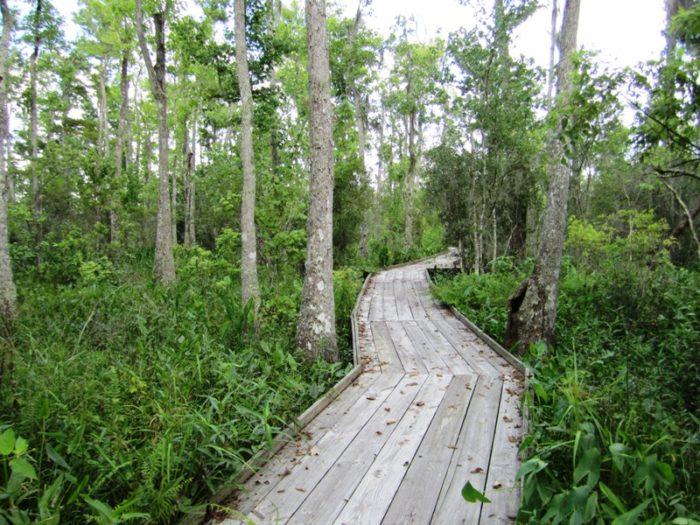 11. Palmetto Boardwalk Trail, Jean Lafitte National Park