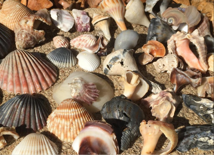 And seashells abound, so be sure to bring a bucket!