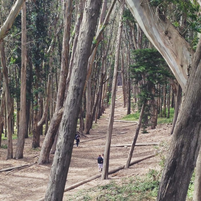 "5. Lovers' Lane & ""Wood Line"" in the Presidio"