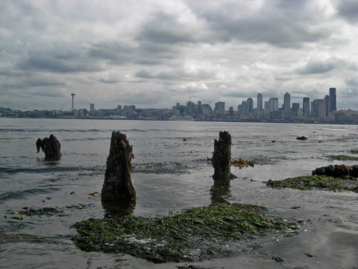 5. When the Elliot Bay tide is very low, you can see some of Seattle's ruins.