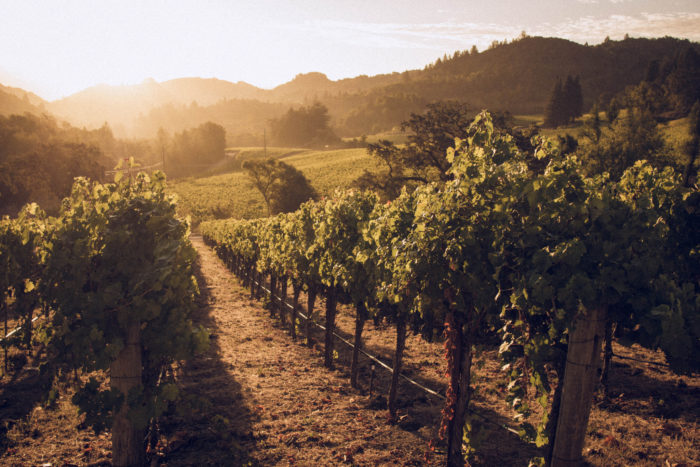 5. Take a road trip through the wine country.