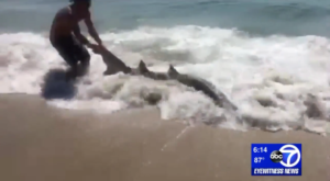 A New Jersey Beach Day Turned Into The Craziest Catch And Release You've Ever Seen