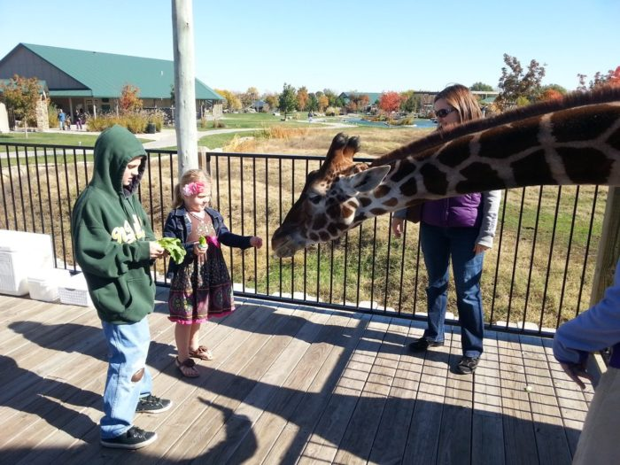 Today the park boasts one of the most hands-on animal exhibits in the region that boasts 6 different feeding stations...