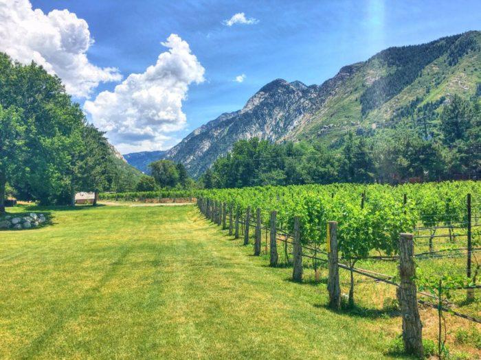 Wander through the vineyard.