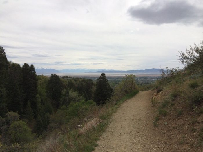 Once you're through the switchbacks, the trail levels out a bit...and you get this view!