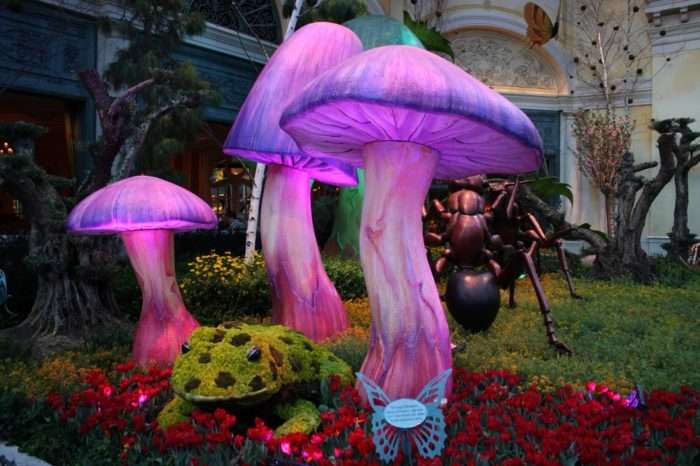 Unlike anything you've ever seen, the Conservatory & Botanical Gardens of the Bellagio is like stepping inside the mind of Alice in Wonderland.