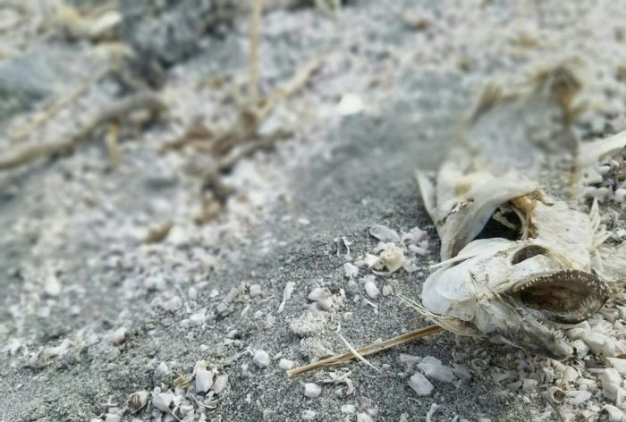 With such high levels of salt and low levels of oxygen, the shores were quickly lined with the remains of dead fish.