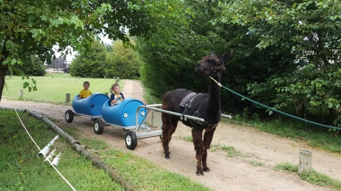 ...and even animal rides!