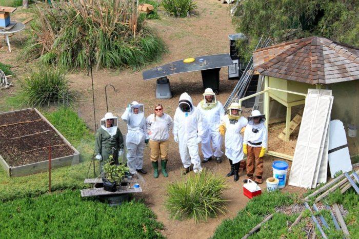 8. Beehive Tour -- San Diego
