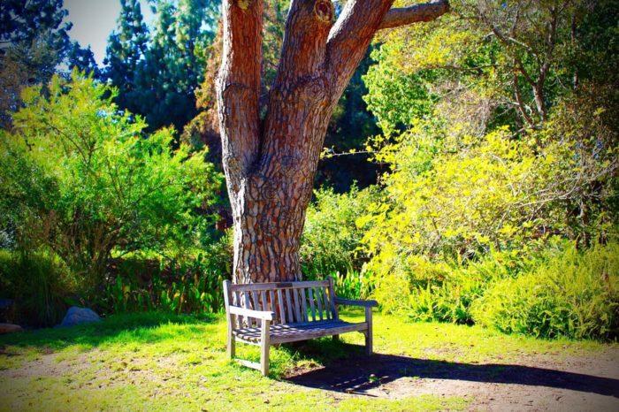 3. Fullerton Arboretum