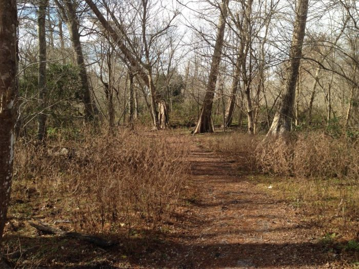 5. Woodland Trail and Park