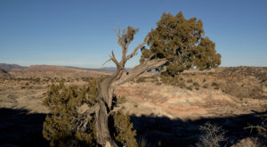 This Little Known Wilderness Area In New Mexico Is The Perfect Place To Get Away From It All