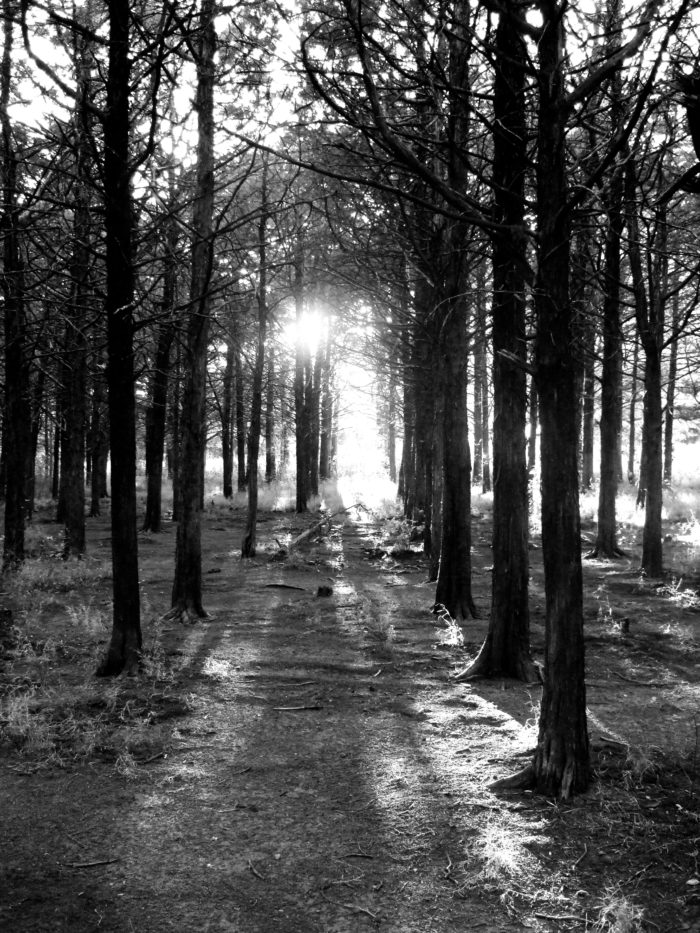 The sunlight is blocked by the canopy of the trees, so the eerie feeling is even more exaggerated by the gloomy atmosphere.