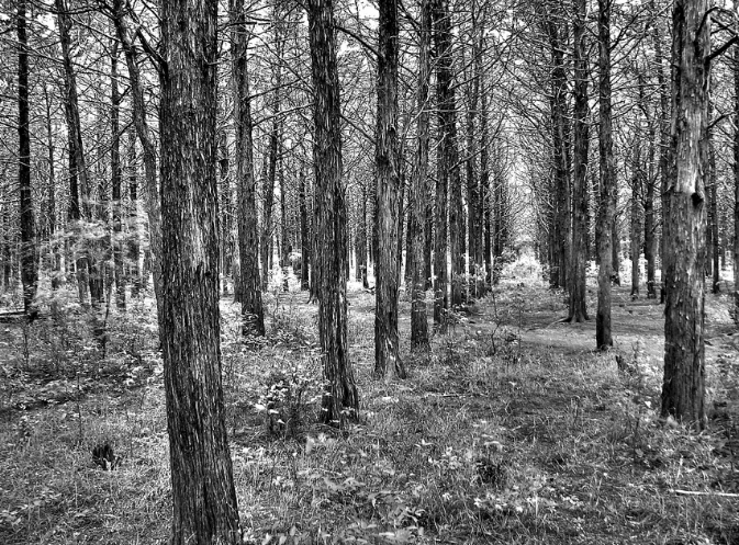 But don't think just the center of the forest is haunted. People have reported seeing ghosts with no heads, weird noises, orbs in photographs, feelings of being touched and many more paranormal experiences.