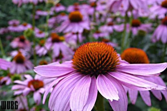 3. West Virginia Botanical Garden, Morgantown