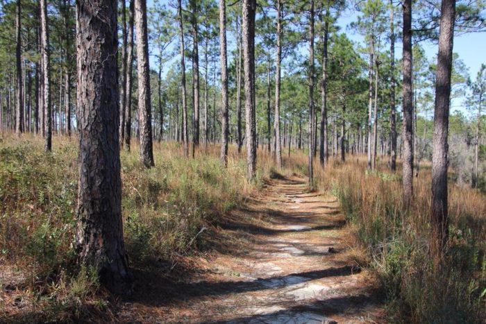 5. Fontainebleau Nature Trail