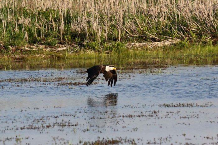 4. Montezuma National Wildlife Refuge - Seneca Falls