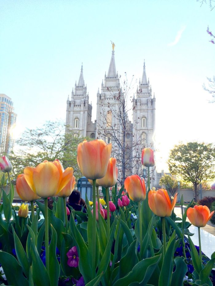 The tulips in the spring are gorgeous.