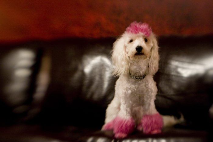9. Our dogs are as stylish as we are.