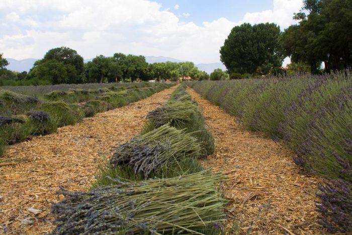 4. Los Poblanos Historic Inn & Organic Farm, 4803 Rio Grande Boulevard NW, Albuquerque