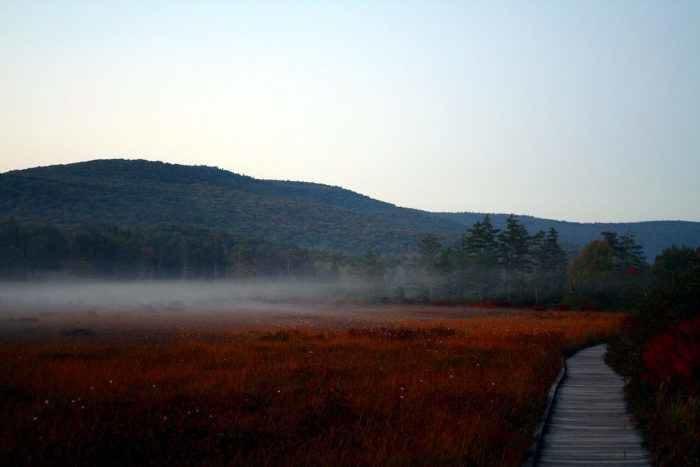 7. Cranberry Glades, Pocahontas County