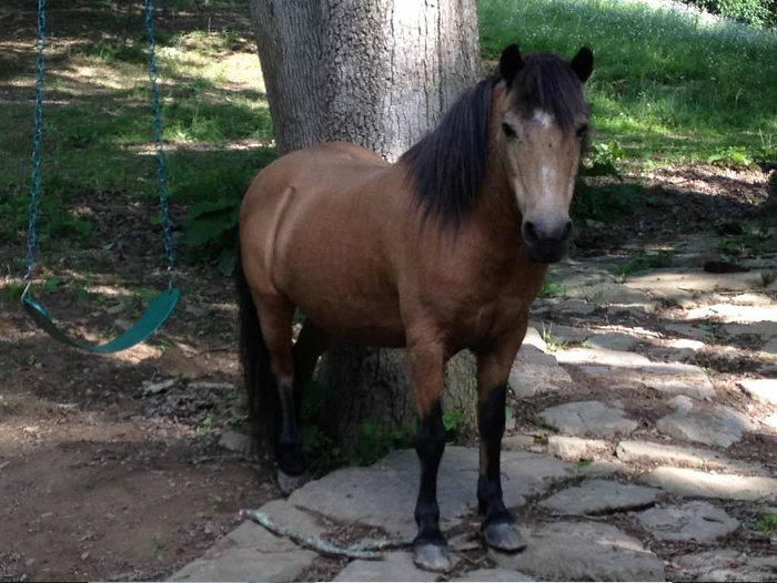 There's also a friendly pony who lives on the grounds.