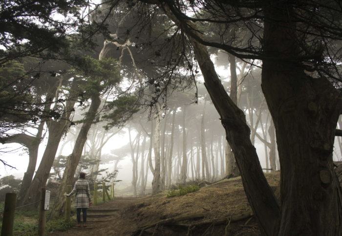 3. Mount Sutro Open Space Reserve
