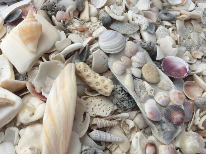 shells-galore