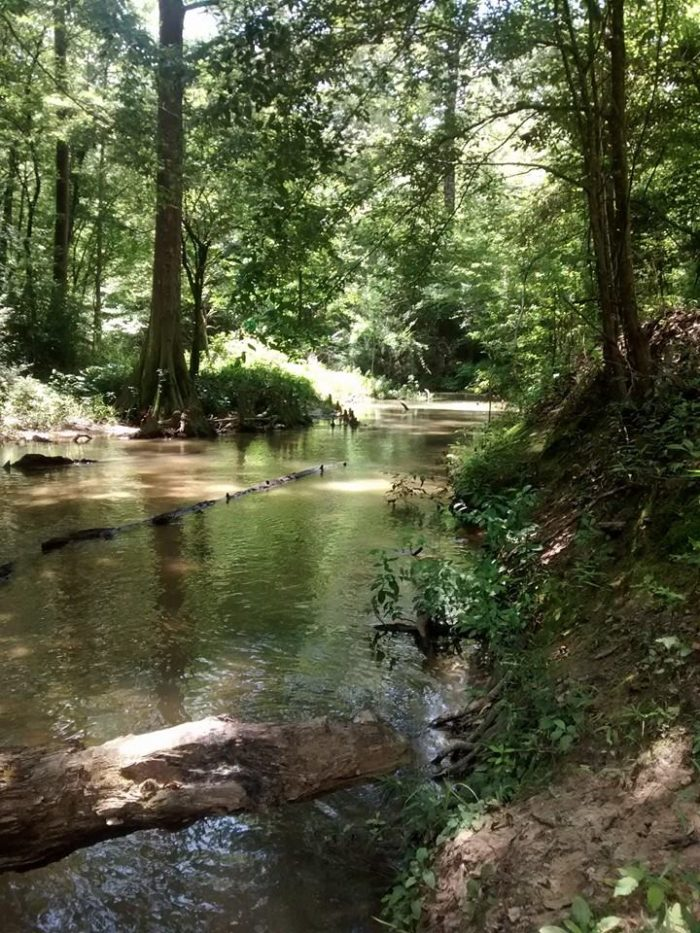 The Spring Creek area is known for its amazing swimming.