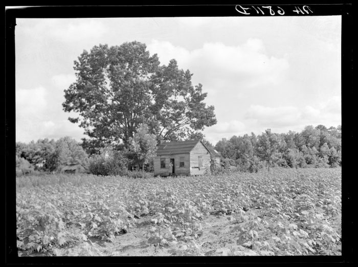 3. Tenant farms were plentiful in the 1930s as the economy rebounded from the Great Depression.