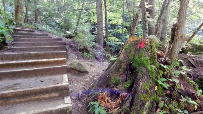 (If you're coming up the stairs from the other direction, follow the beaten path to the right just past this marked tree stump.)