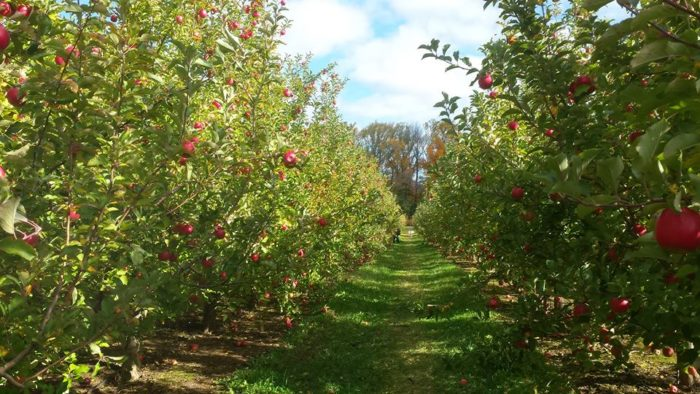 1. Solebury Orchards – New Hope