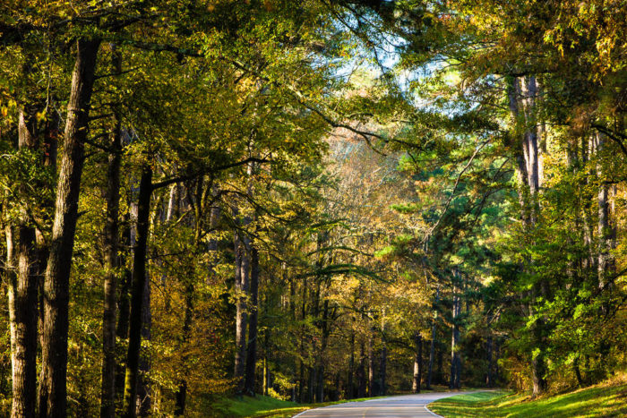 The 444-mile scenic byway begins in Natchez and ends in Nashville, Tennessee, following the path of the Old Trace.