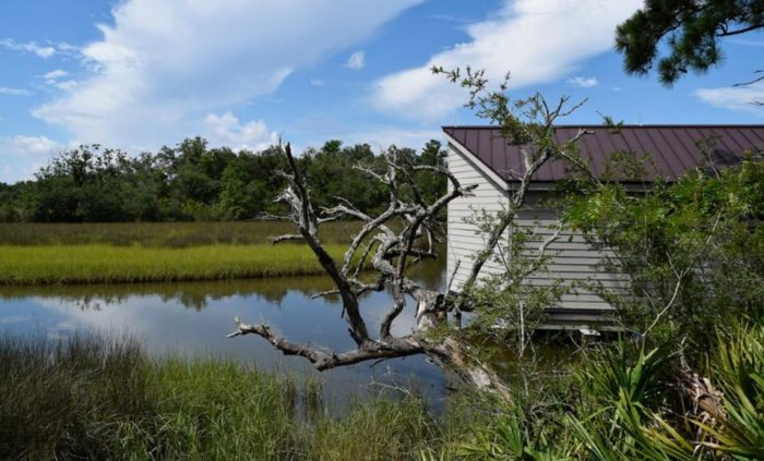 Continue to follow the trail along the salt marsh, and you'll find a variety of vibrant greenery and trees, including saw palmettos, magnolias, and oak trees.