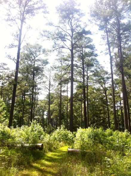 10. Woodpecker Hiking Trail, Brooksville