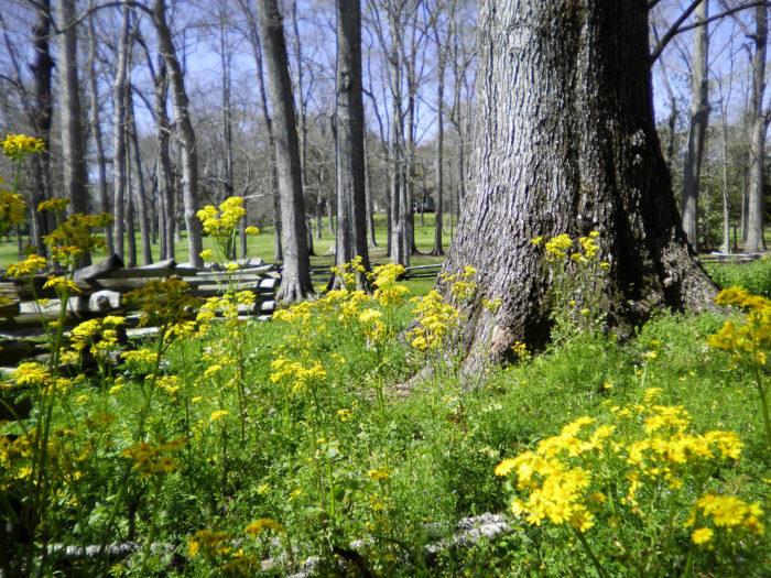 fields of wildflowers?