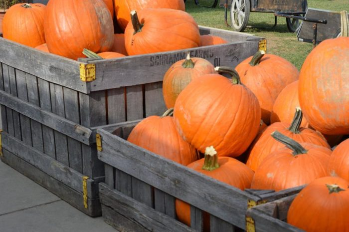 10 Best Pumpkin Patches Near Pittsburgh In 2016