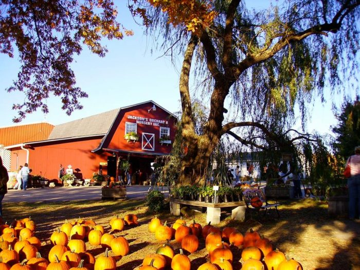 10. Jackson's Orchard, Bowling Green
