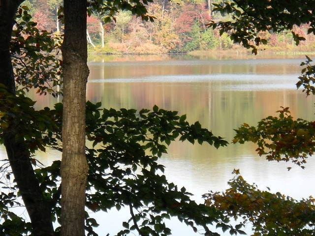 Head north to Killens Pond for more waterviews and stunning trees.