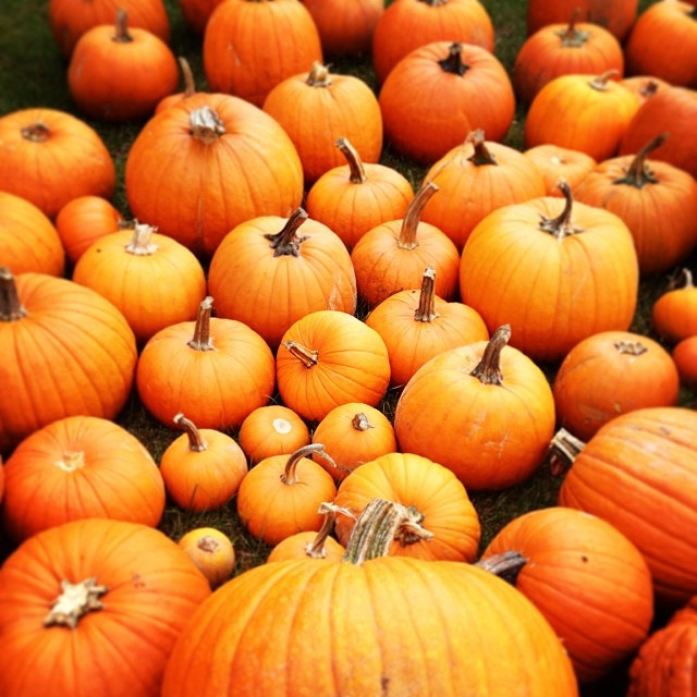 7. Giant Pumpkin Wigh-Off at Freirchs Farm, Warren: October 8th