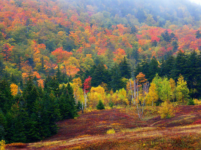 Normally, foliage season starts in mid to late September, and comes further south through October.
