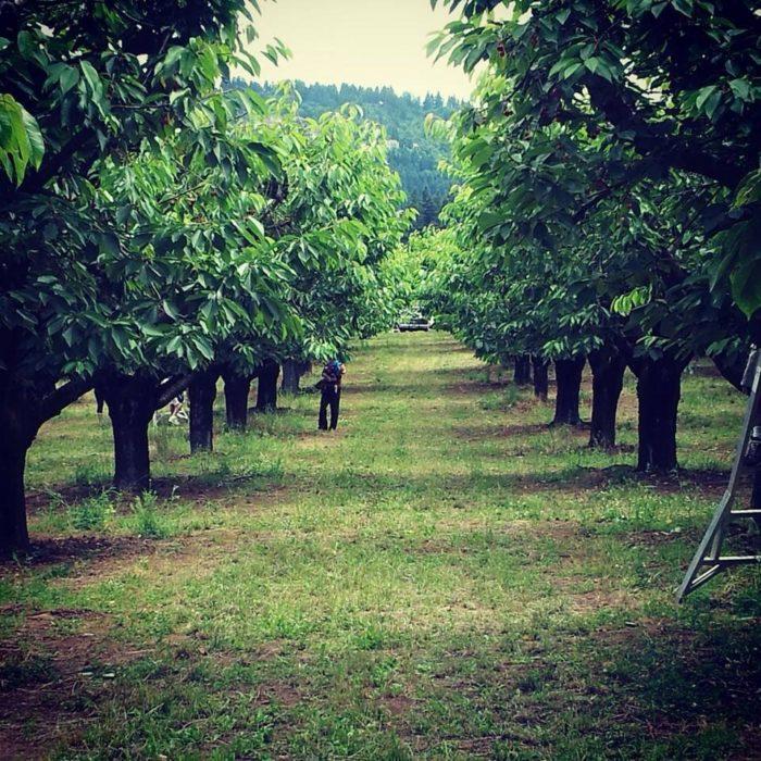 2. Sherwood Orchards